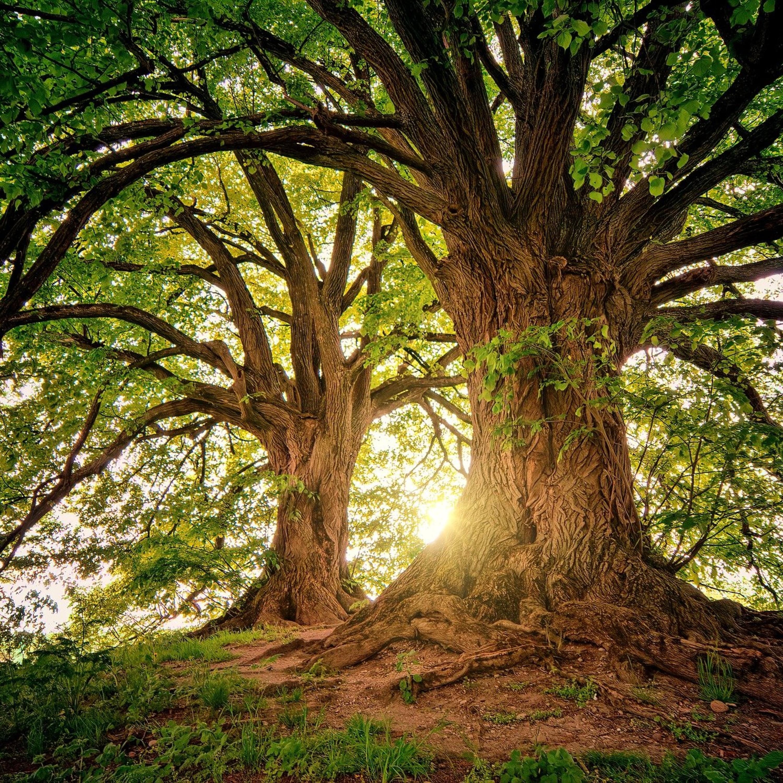 Entenda a diferença entre árvores nativas e exóticas