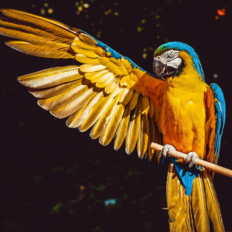 Conheça as diferenças entre animais nativos e exóticos