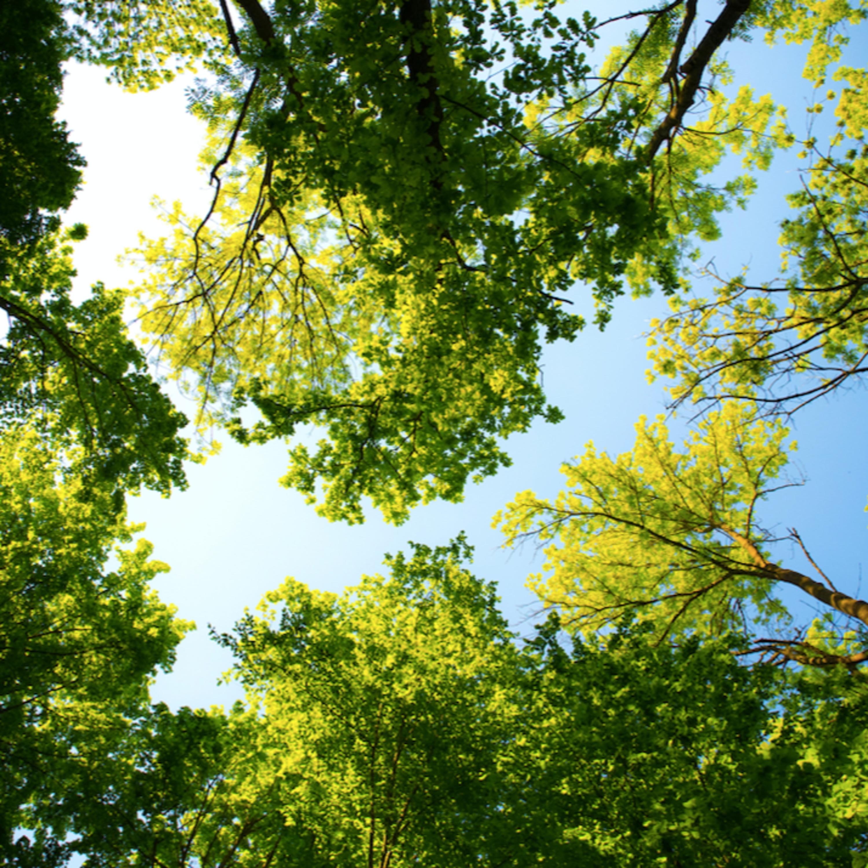 Vamos plantar uma árvore? Saiba a importância da atitude para o meio ambiente