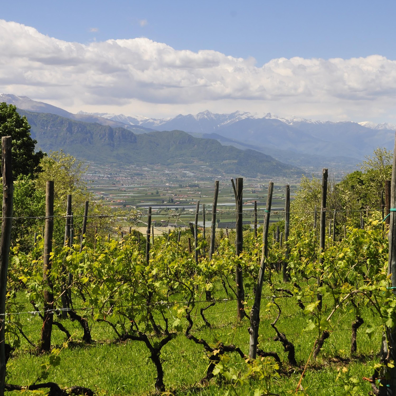 Volta ao Mundo do Vinho: Piemonte é lar de vinhos lendários