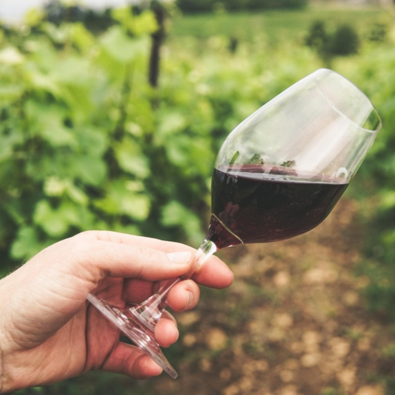 Conheça todos os segredos dos vinhos da uva