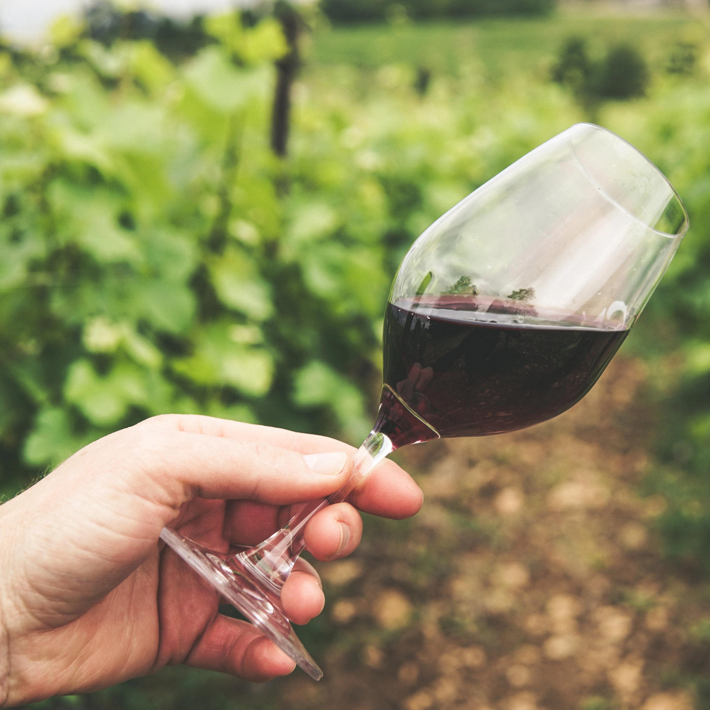 Tira-dúvidas: proteção da parreira no frio, diferença entre vinho e espumante, e variedade de uvas