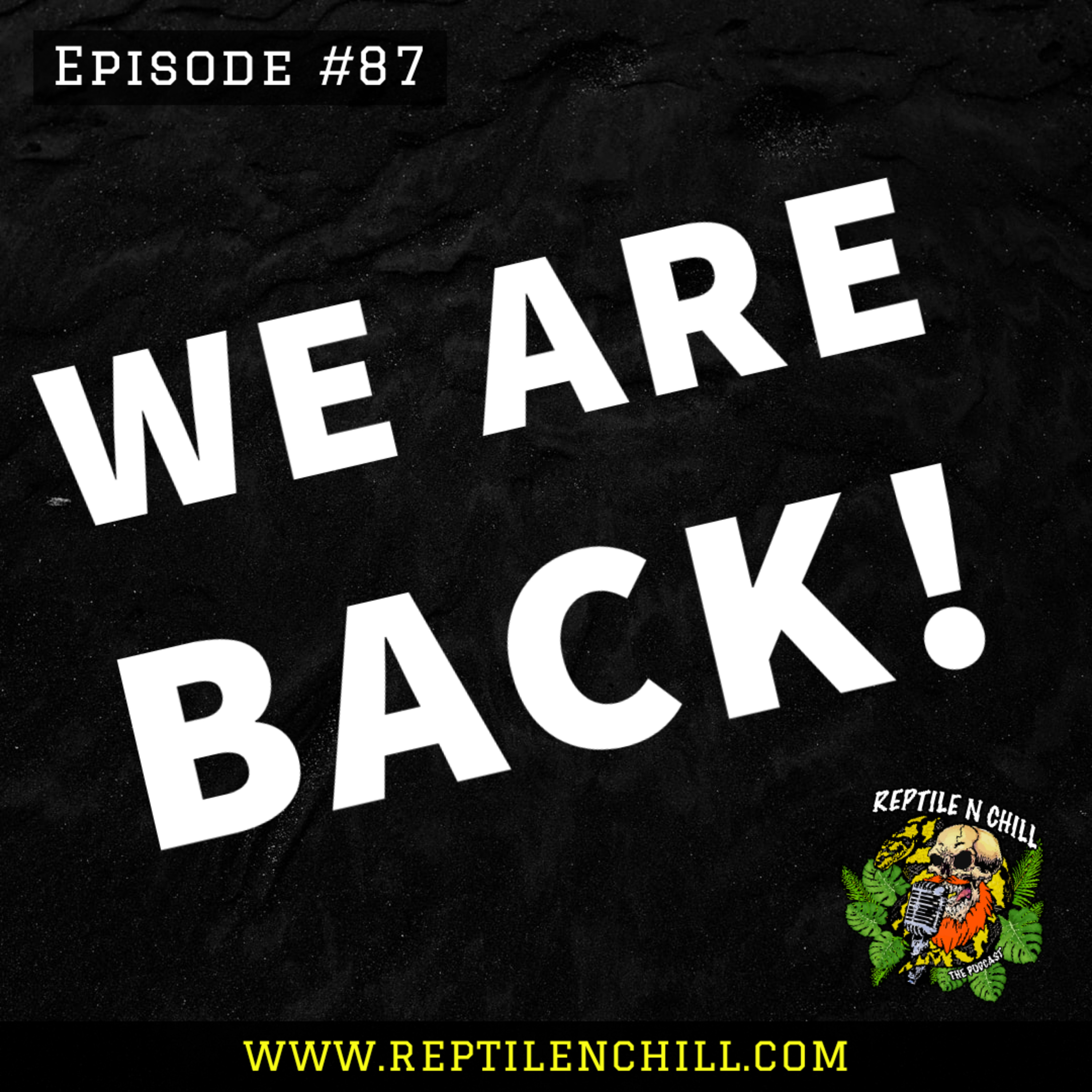 The boys are back in town! - 87 Reptile n Chill