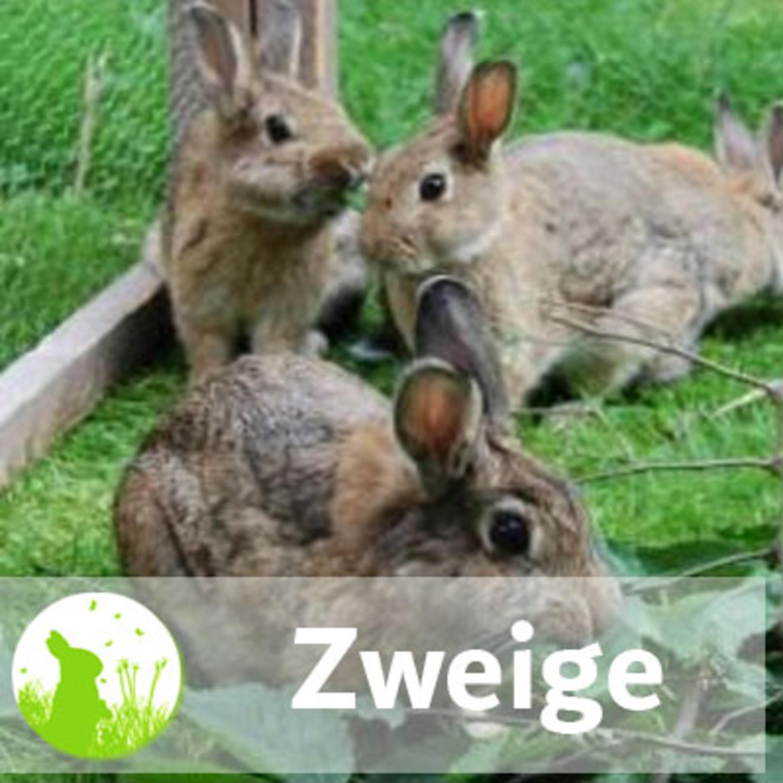 Knabberspaß: Zweige in der Kaninchenernährung