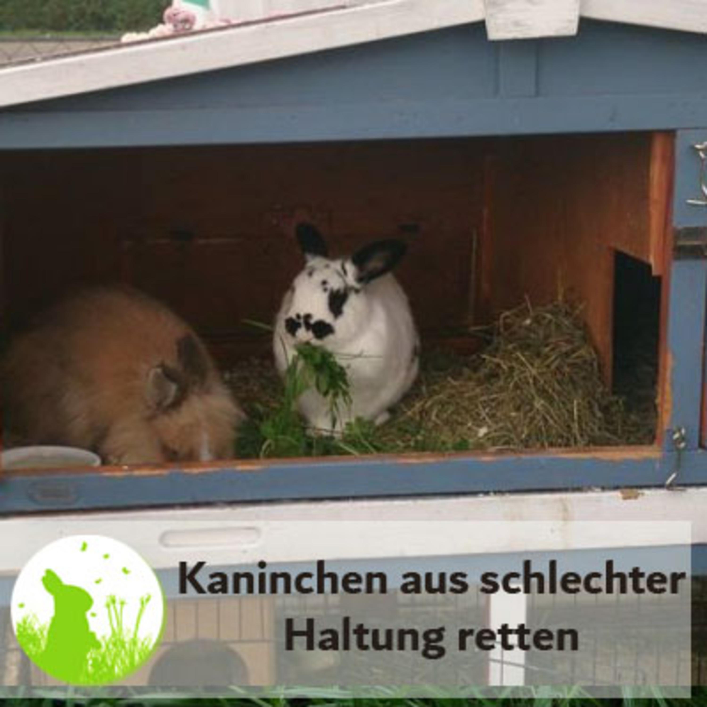 Kaninchen aus schlechter Haltung retten