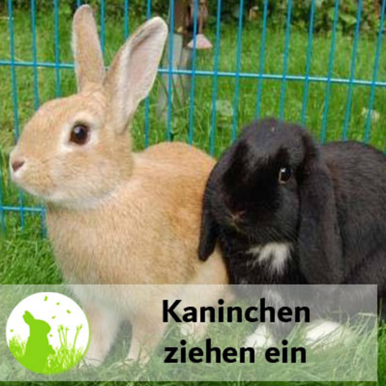Kaninchen ziehen ein