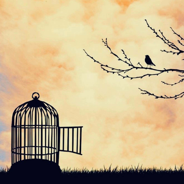 Cosa vuol dire essere liberi?