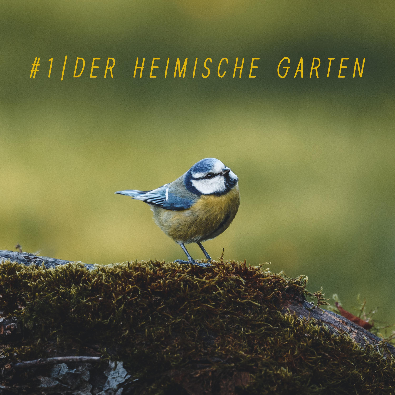 #1 | Der heimische Garten & seine Bewohner