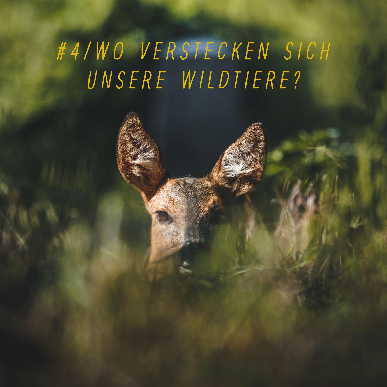 #4 | Wo verstecken sich unsere Wildtiere?