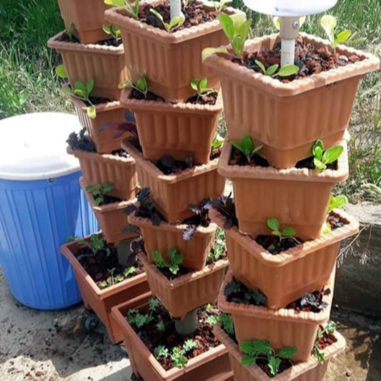 Միզունա, մորինգա, եղերդակ, ռուկոլա ․․․ թանկարժեք ու շատ օգտակար բույսեր՝ Հայաստանում