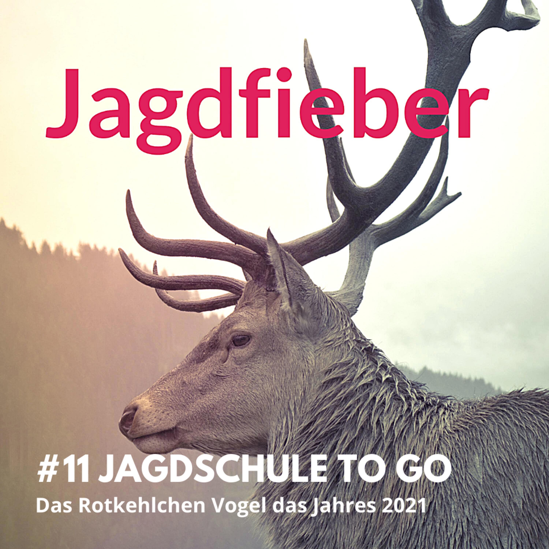 """#11 Jagdschule to go """"Das Rotkehlchen"""" #jagdfieberpodcast #jagdschuletogo #rotkehlchen #vogeldesjahres #jungjäger #jagen #sachsenjägerin"""