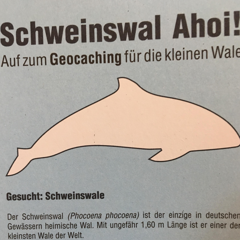 10.07.19 - Schweinswal Ahoi!