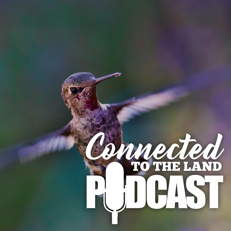 Backyard Birding: How Birds Keep Us Grounded