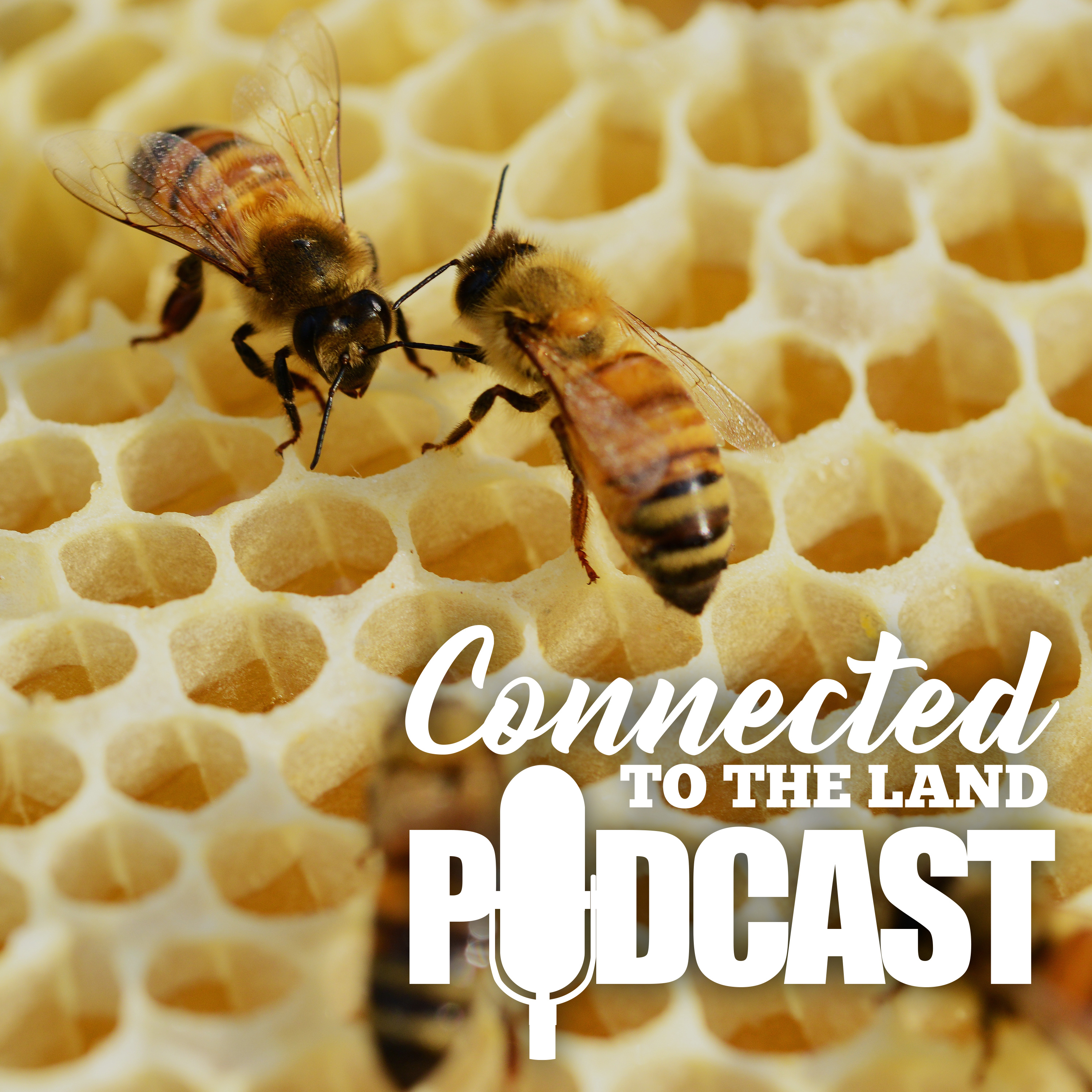 Beekeeping: What's the buzz?