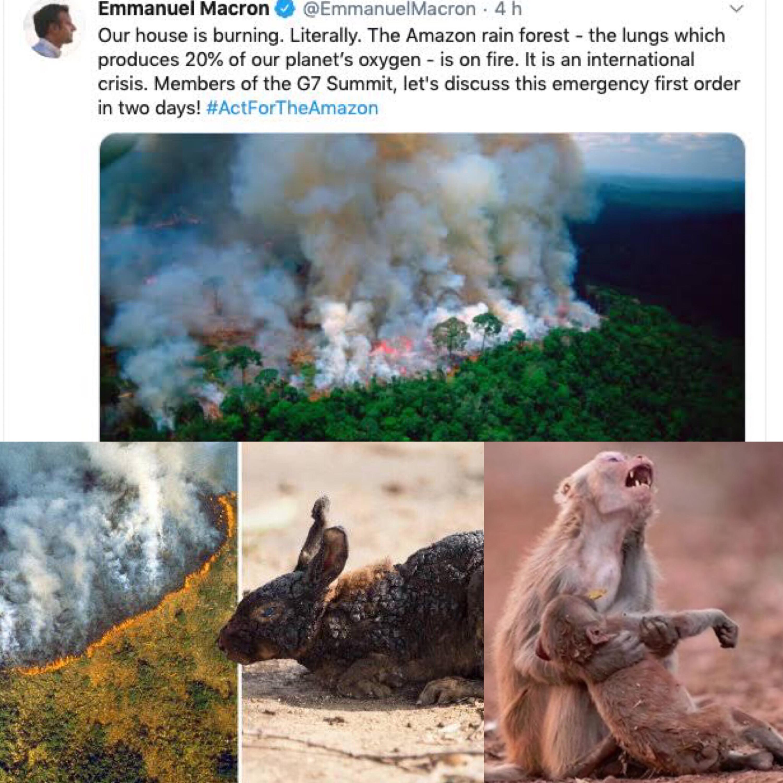 O papel da fotografia na questão recente das queimadas na Amazônia