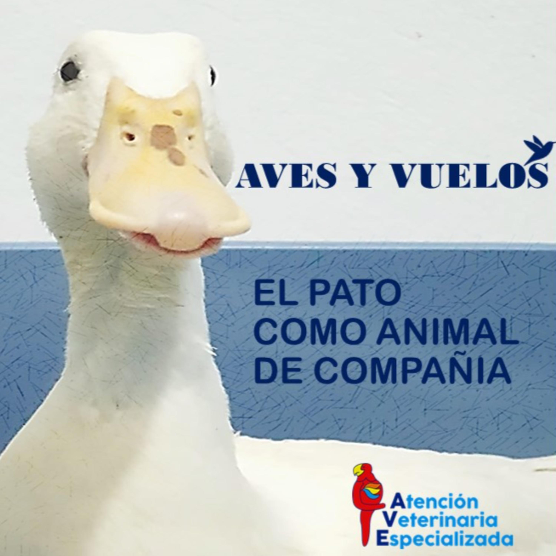 El Pato como Animal de Compañia