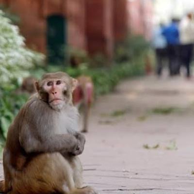 Monkeys outside my house
