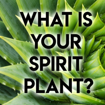 Spirit Plants (What is a Spirit Plant and How To Find Your Spirit