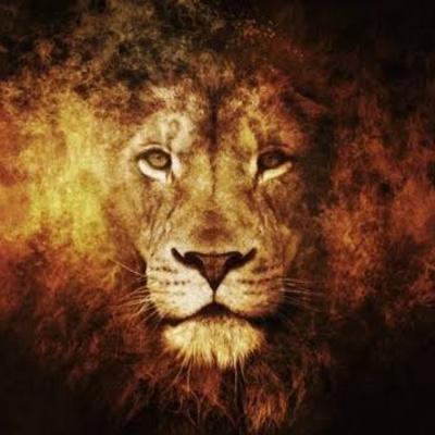 LIONSGATE 8-8 ACTIVATE GRACE