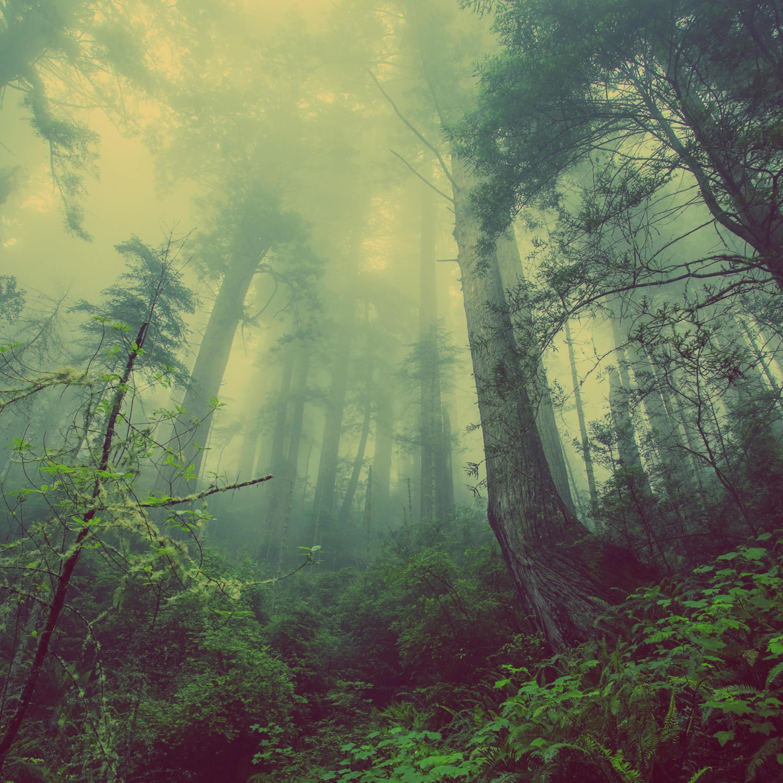 En el bosque que queda   REVISTA NÓMADAS Podcast