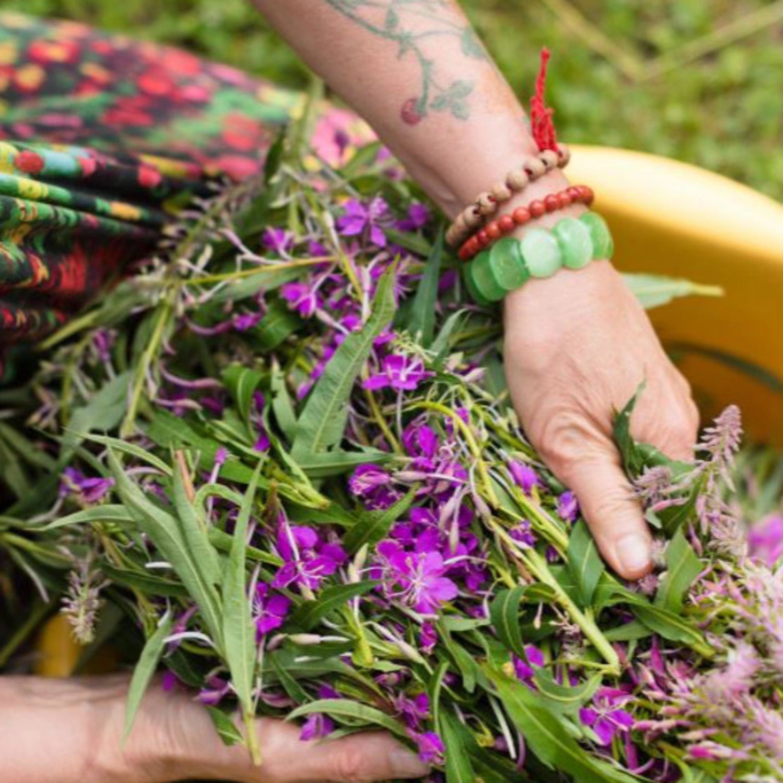 Herbaticumi taimetarkused