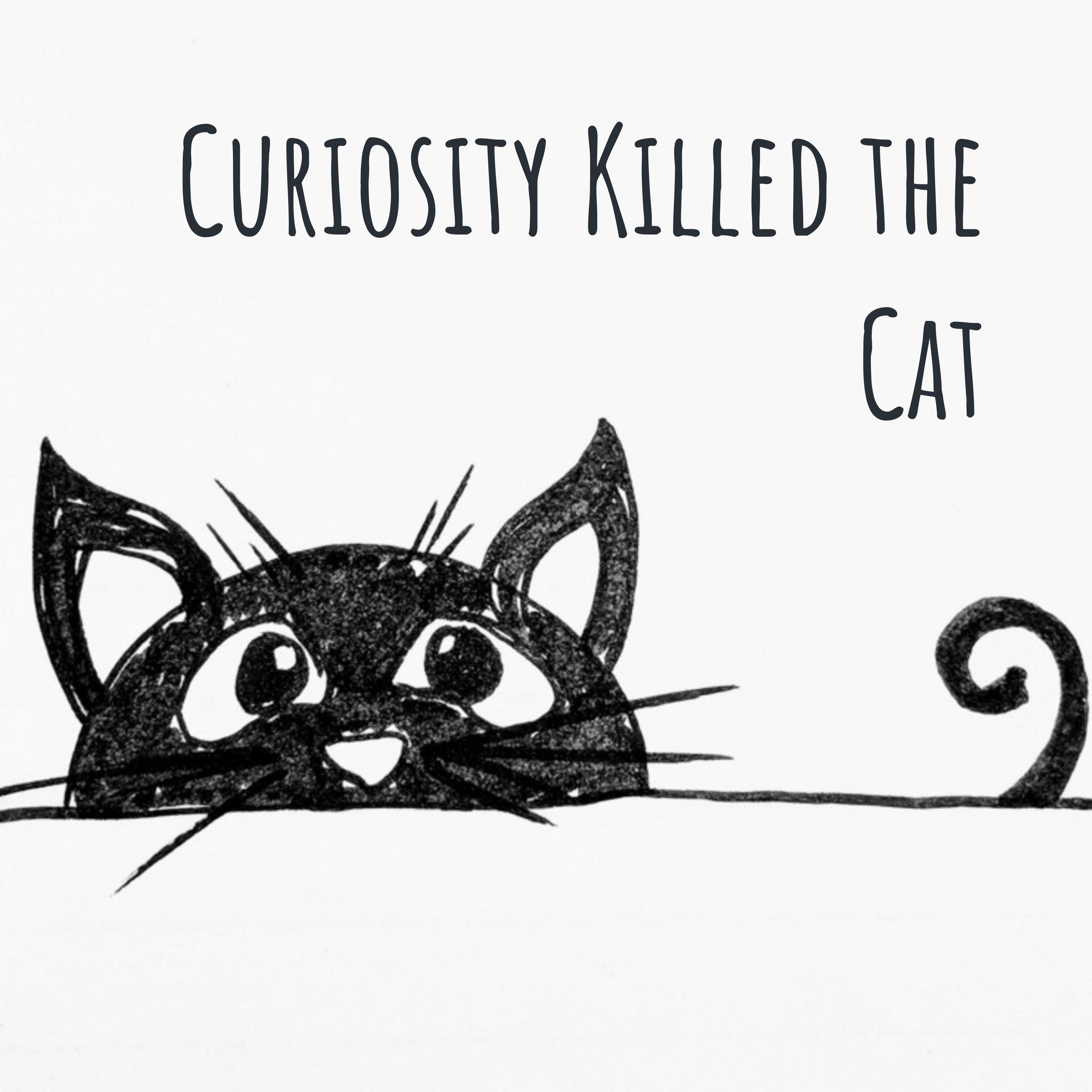 Image result for curiosity killed the cat