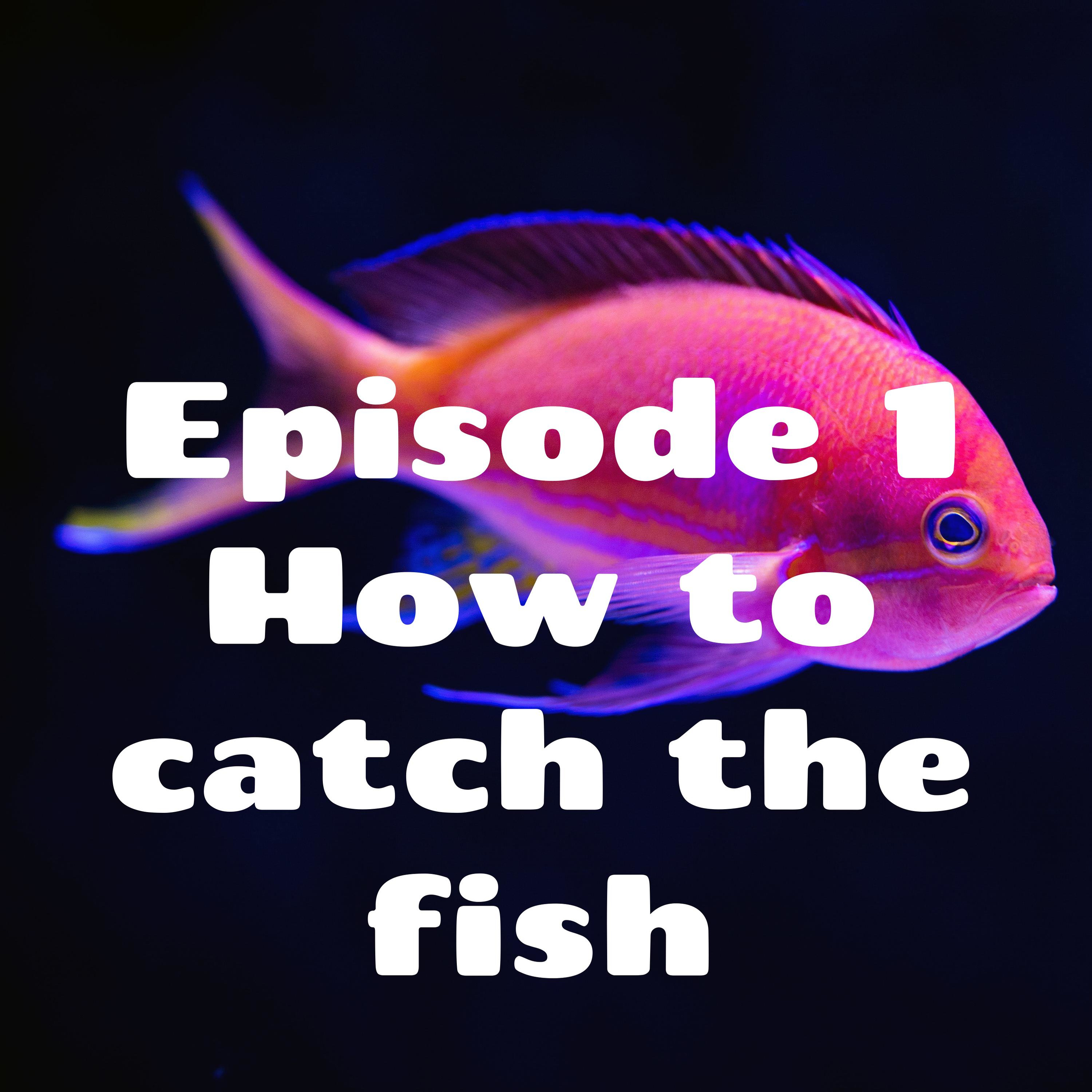 eFishode 1 how to catch the fish