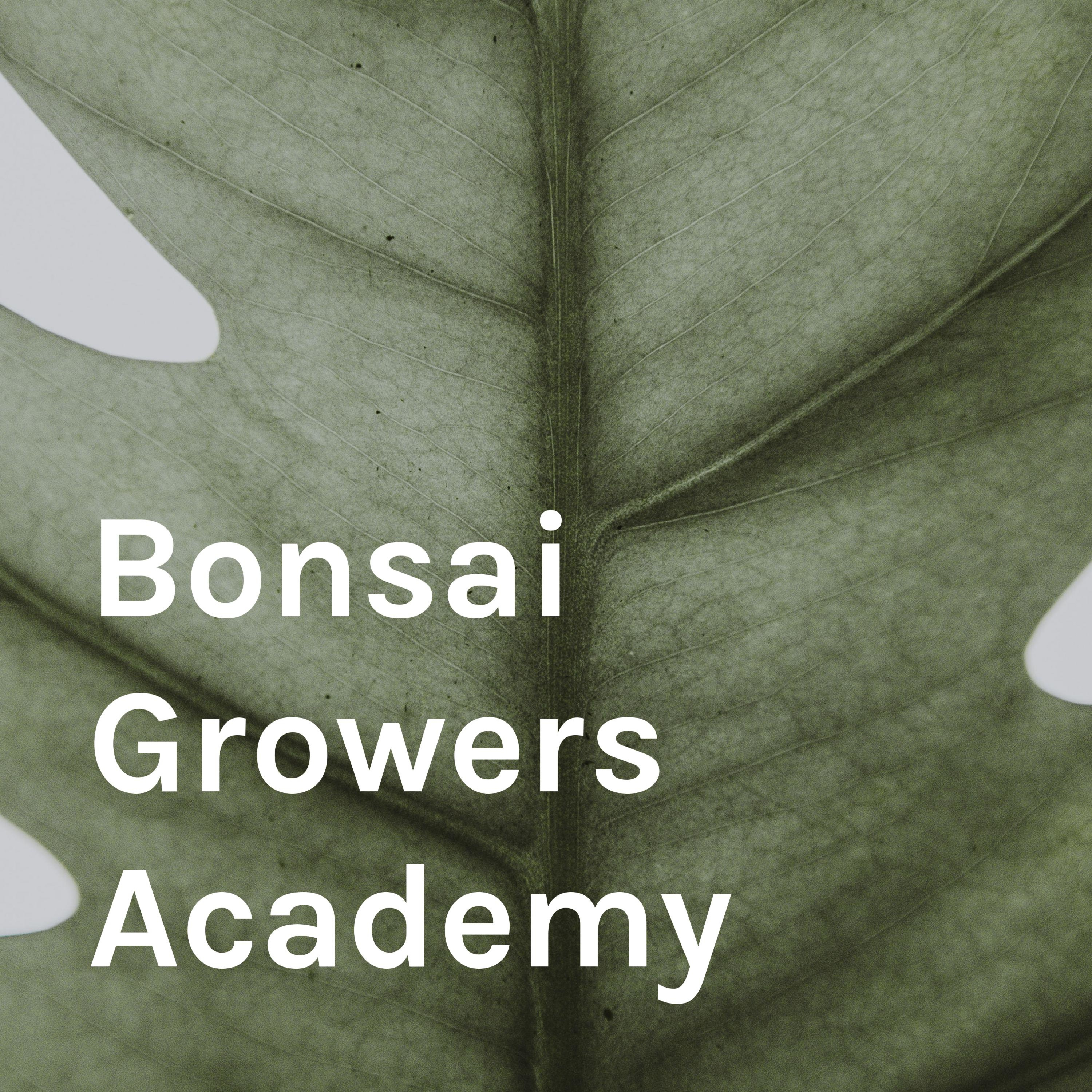 Episode 10: Preparing your bonsai trees for a British winter