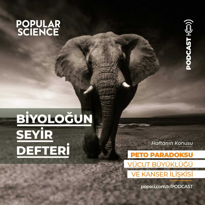 #8 Peto Paradoksu - Biyoloğun Seyir defteri