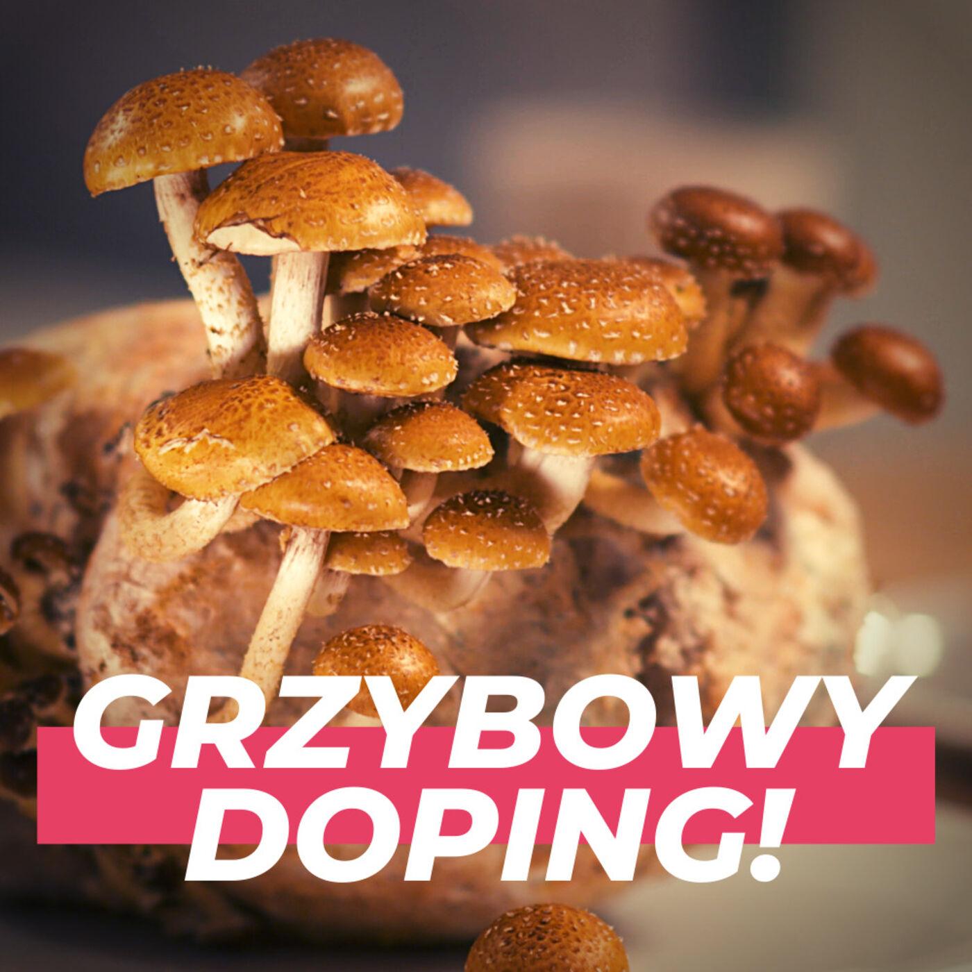 Sportowcy dopingujący się grzybami! Doktorant uniwerku z Krakowa prowadzi własne Centrum Uprawy #002