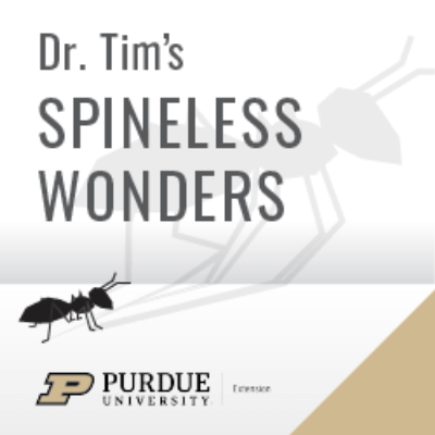Time Flies Like The Wind Fruit Flies Like Bananas By Dr Tim S Spineless Wonders A Podcast On Anchor